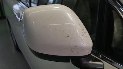 bug-remover-side-mirror.jpg